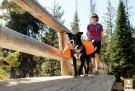 Ruffwear Approach Pack™ orange thumbnail