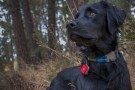 Ruffwear Top Rope™ Collar grå thumbnail