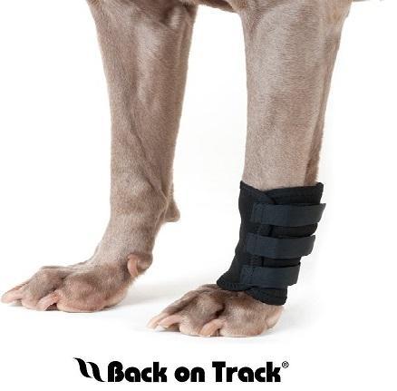 Back on Track